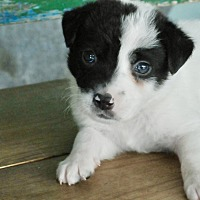 Adopt A Pet :: SGT - San Antonio, TX
