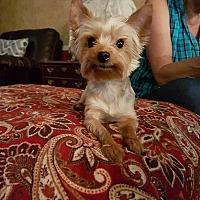 Adopt A Pet :: Armani - Crump, TN