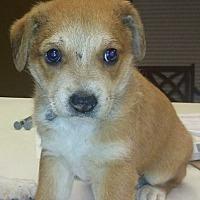 Adopt A Pet :: Russ - Westminster, MD