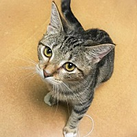 Adopt A Pet :: Winnie - Tempe, AZ