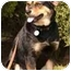 Photo 3 - Rottweiler Mix Dog for adoption in Rolling Hills Estates, California - Remi