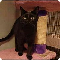 Adopt A Pet :: Noir--PETSMART - Muncie, IN