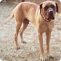 Adopt A Pet :: Ben - Toledo, OH