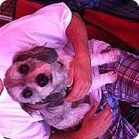 Adopt A Pet :: Gucci - North Hollywood, CA