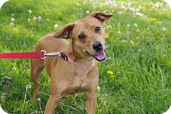 Golden Retriever Mix Dog for adoption in Elyria, Ohio - Lucy-Prison Graduate