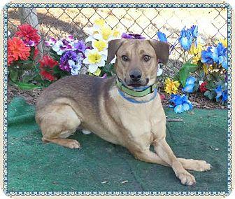 Shepherd (Unknown Type) Mix Dog for adoption in Marietta, Georgia - SCAR - (R)