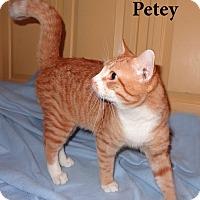 Adopt A Pet :: Petey - Bentonville, AR