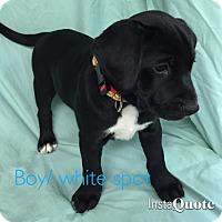 Adopt A Pet :: Keats - Cumming, GA