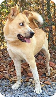 Husky Mix Dog for adoption in Harrisonburg, Virginia - Skunkie