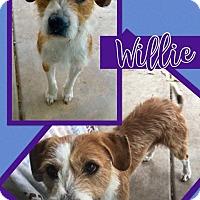 Adopt A Pet :: Willie - Scottsdale, AZ