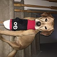 Adopt A Pet :: Ren - Cambridge, ON
