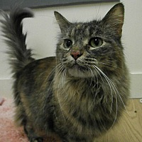 Adopt A Pet :: Gypsy - Milwaukee, WI