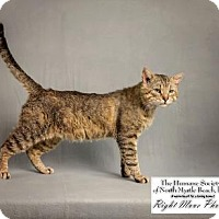 Adopt A Pet :: Blythe - North Myrtle Beach, SC