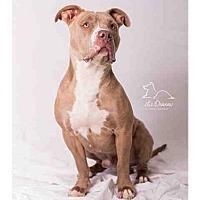 Adopt A Pet :: *HUDSON* - Salt Lake City, UT