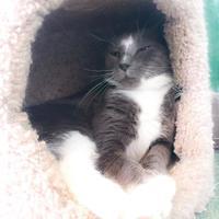 Adopt A Pet :: ASH - Wantagh, NY
