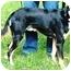 Photo 1 - Shepherd (Unknown Type) Mix Dog for adoption in Osseo, Minnesota - Buddy