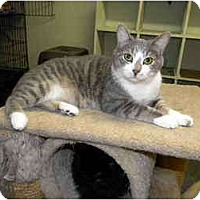 Adopt A Pet :: Tommy - Bartlett, IL