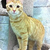 Adopt A Pet :: Sandman - Warminster, PA