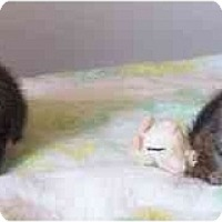Adopt A Pet :: Sally's kittens - cincinnati, OH