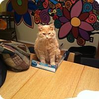Adopt A Pet :: Spitfire - St. Louis, MO