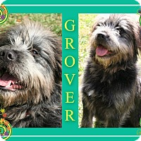 Adopt A Pet :: Grover - Tampa, FL