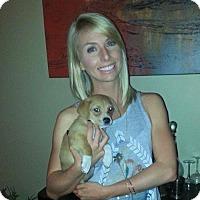 Adopt A Pet :: Hayley - Sacramento, CA