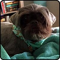 Adopt A Pet :: COLBY - ADOPTION PENDING! - Seymour, MO