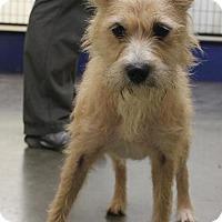 Adopt A Pet :: Boots # 977 - Nixa, MO