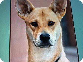 German Shepherd Dog Mix Puppy for adoption in Los Angeles, California - SUNSHINE VON SEUSS