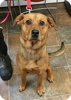 German Shepherd Dog/Rottweiler Mix Dog for adoption in Lisbon, Ohio - Gemma