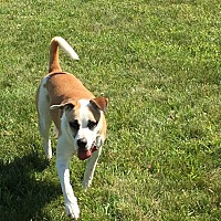 Adopt A Pet :: Ryley - East Randolph, VT