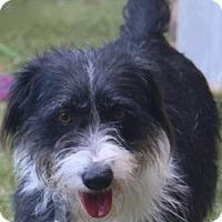 Adopt A Pet :: Sandra Dee - Woonsocket, RI
