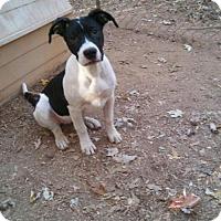 Adopt A Pet :: Tia - Loganville, GA