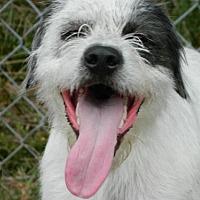 Adopt A Pet :: Pool - Randleman, NC