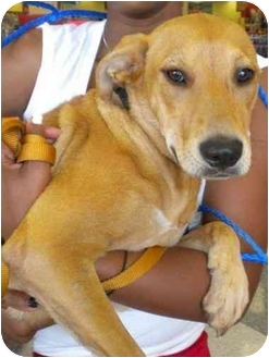 Fox Terrier (Smooth) Mix Dog for adoption in Humble, Texas - Emma