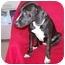 Photo 2 - Beagle Mix Dog for adoption in Anna, Illinois - ELLIE