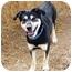 Photo 2 - Shepherd (Unknown Type) Mix Dog for adoption in YERINGTON, Nevada - Nojack