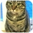 Photo 3 - Domestic Shorthair Cat for adoption in Plainville, Massachusetts - Ethel