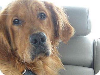 Golden Retriever Dog for adoption in Denver, Colorado - Charlie