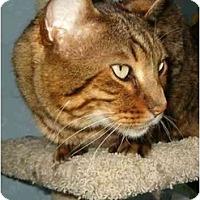 Adopt A Pet :: Benny spnosor me! - Keizer, OR