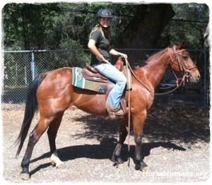 Quarterhorse Mix for adoption in Sac, California - Venus