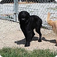 Adopt A Pet :: Jem - Salem, NH