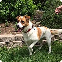 Adopt A Pet :: Molly - San Antonio, TX