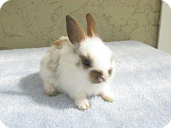 Other/Unknown Mix for adoption in Bonita, California - Stache