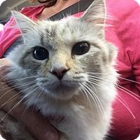 Adopt A Pet :: Blythe - McDonough, GA