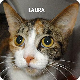 Calico Cat for adoption in Lapeer, Michigan - LAURA-PRETTY CALICO AVAIL 2/12