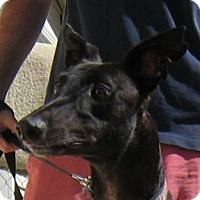 Adopt A Pet :: Corey - Oak Ridge, NC