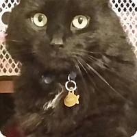 Adopt A Pet :: Clark - Cranford/Rartian, NJ