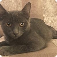 Adopt A Pet :: Hazy - North Highlands, CA