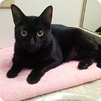 Adopt A Pet :: Tiffany - Jackson, NJ